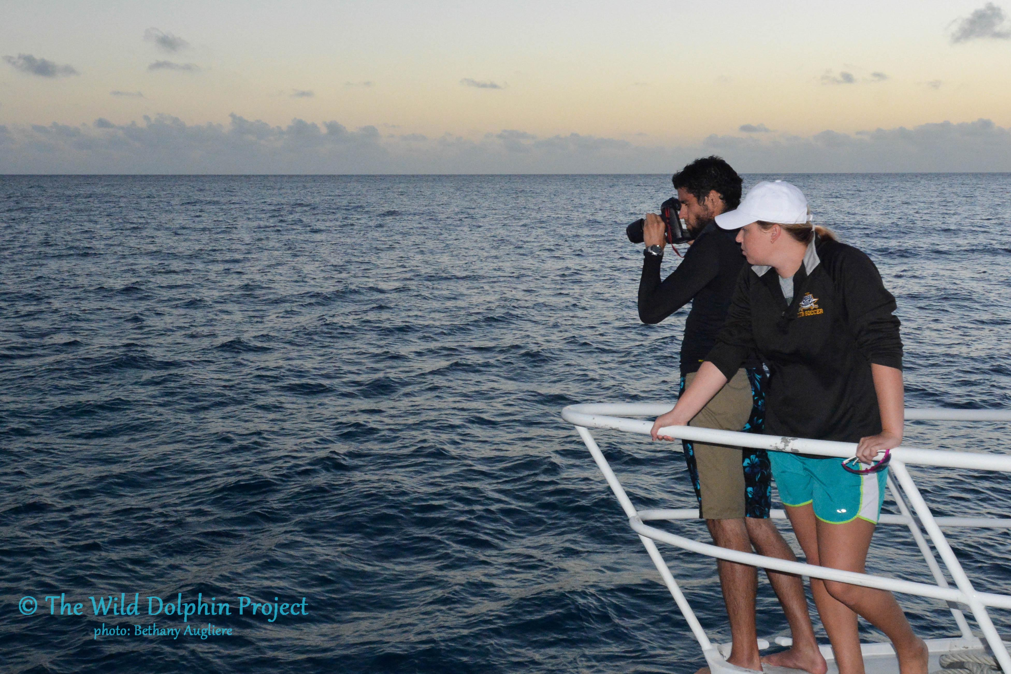 Graduate students with the Wild Dolphin Project take surface photo-identification shots of the dolphins