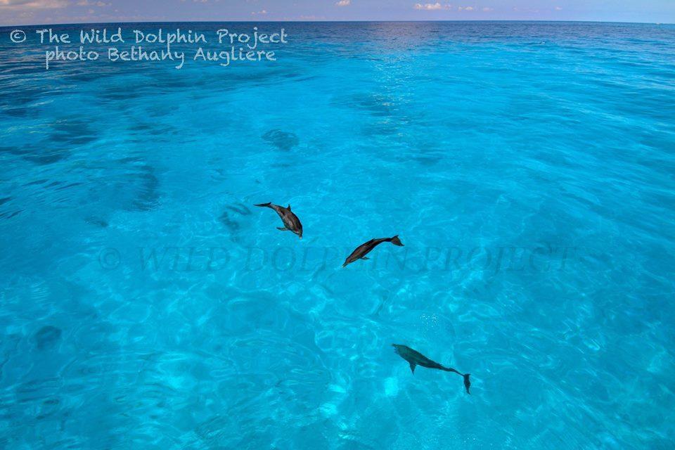 dolphinsbahamas