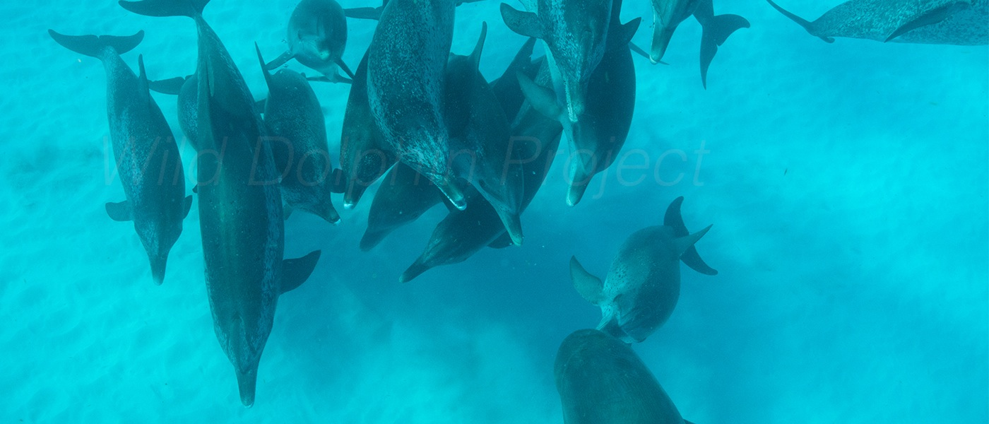 home wild dolphin project