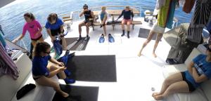 back-deck2