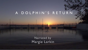 Dolphin's Return
